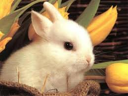 Image of a rabbit.